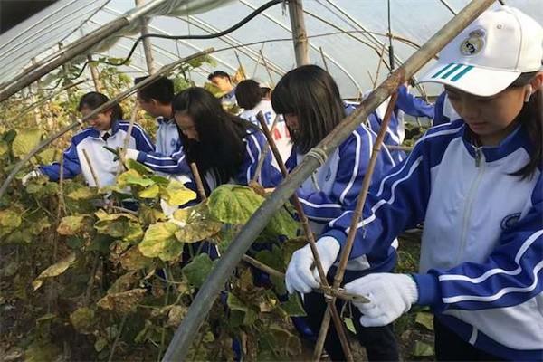 杭州外国语剑桥高中学农活动图集