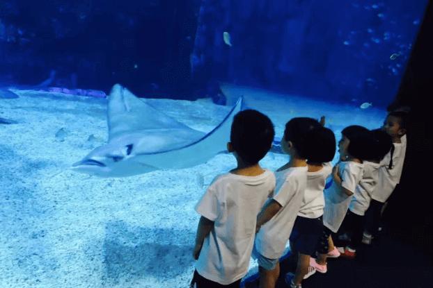 天津艾毅国际幼儿园暑期夏令营图集