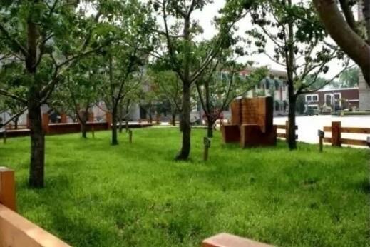 天津市实验中学国际部校园景观图片04