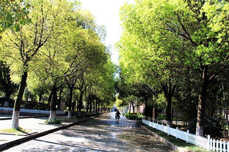 温州市第二十一中学国际部校园风景图片04