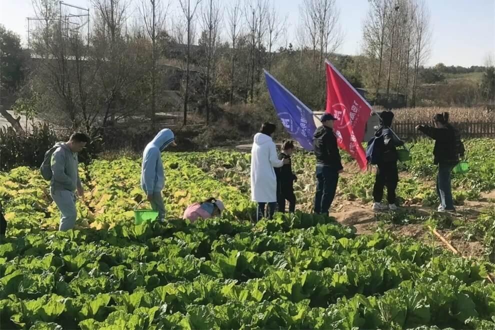青岛威德明特双语学校农耕体验活动图片04